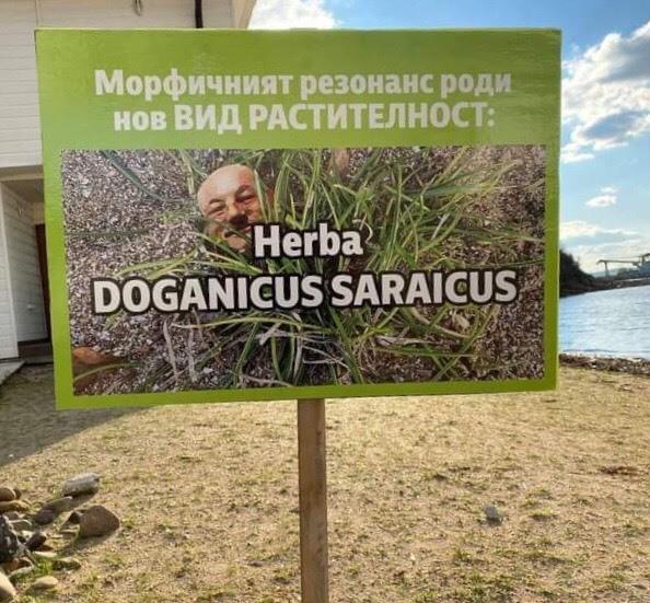 """""""Сарайграс"""" поникна на плажа на """"Росенец"""""""